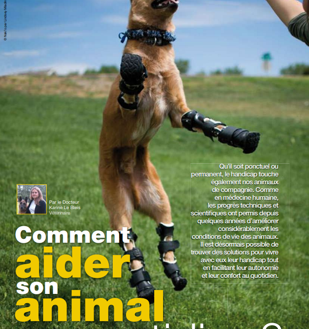 Comment aider son animal au quotidien ?