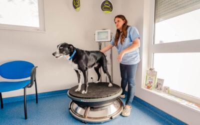 Conseils vétérinaires dans le Haut-Rhin