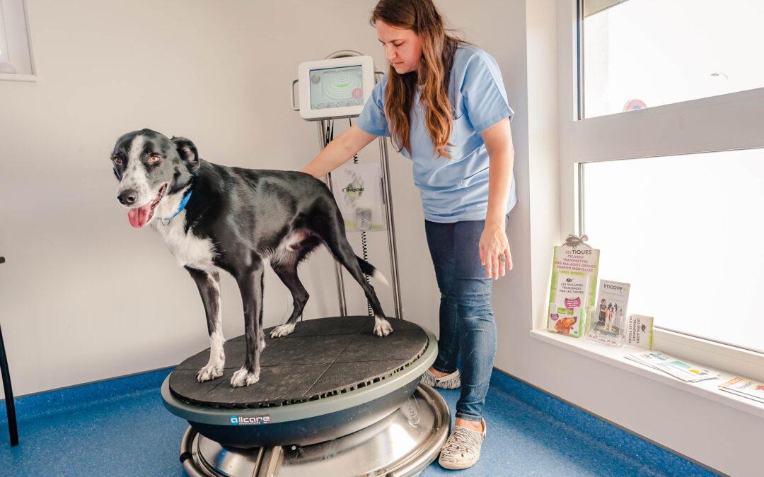 Médecines complémentaires vétérinaires Haut-Rhin