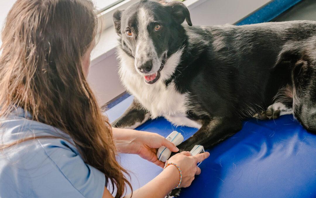L'homéopathie pour les chiens