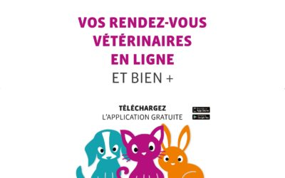 Vétérinaire près de Cernay